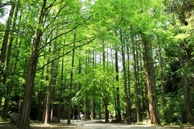 春のお出かけ🌸生田緑地