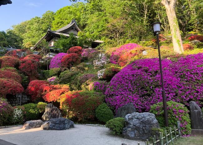 等覚院(つつじ寺)の写真