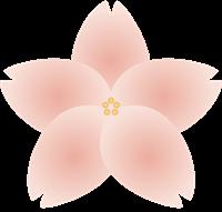 桜の花びらのイラスト②