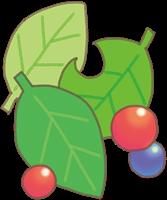 葉っぱと木の実のイラスト