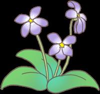すみれの花のイラスト②